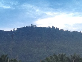 Bukit Galla seen from the oil palm plantation near the Seremban highway rest area. This is not the peak but a lesser peak which is blocking the true peak that is at the back