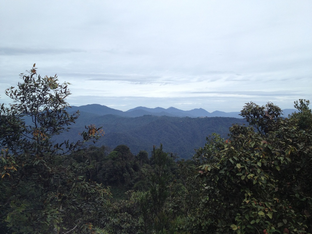 A fantastic view of the Titiwangsa peaks to the north from Ulu Semangkok peak. The leftmost high peak is Pine Tree Hill. The shorter peak to the left of it is Twin Peak. The row of peaks to the right of Twin Peak are the Semangkok peaks, with Gunung Semangkok being the (probably) third one. The buildings of Fraser's Hill can just be seen at the top of the lower hills in the middle of the picture