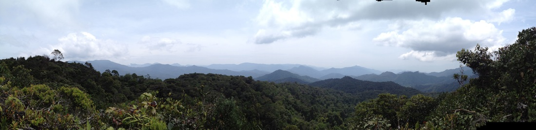 Panorama looking to the north, with Semangkok in the middle The peak on the extreme left, foreground, with the large fan-like tree is Rhodo Hill, a.k.a. Twin Peak
